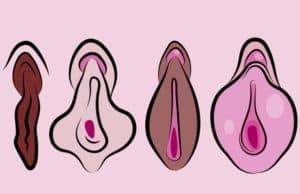 Gewusst? Farbe der Schamlippen bestimmt Sexleben!